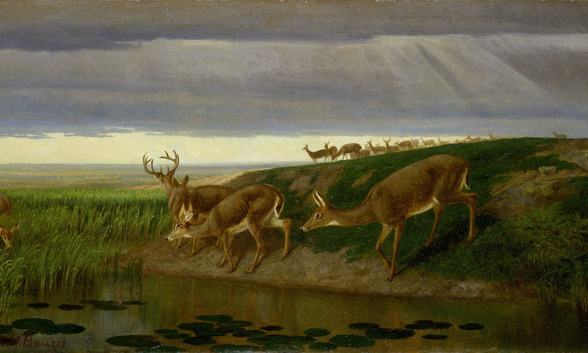 A painting of a group of elks
